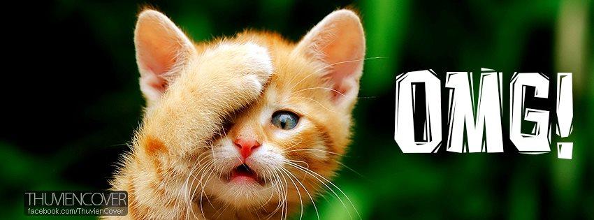 Ảnh bìa mèo con Oh My God