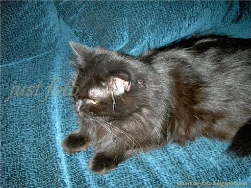 Бася животные кошки коты кот кошка черный черная фото фотография