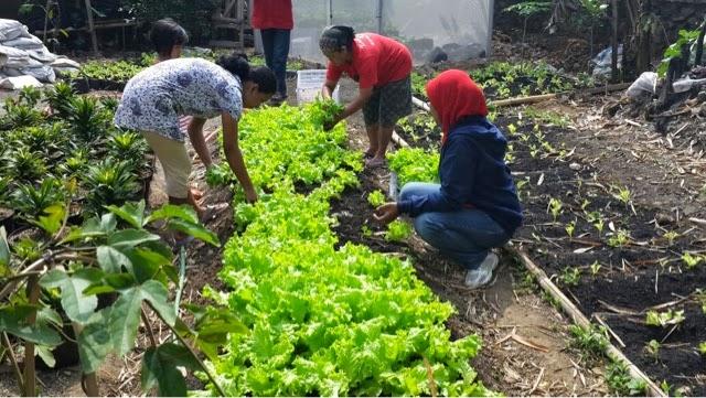 3 Kreativitas Warga di Kampung Berkebun