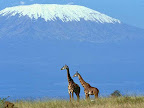 Al Gore wrong again! 'Mount Kilimanjaro is slowly building up its snow cover, allaying fears of prominent scientists who had predicted witnessing the eminence lose its famous white hat'