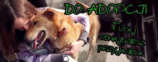 adoptuj psiaka