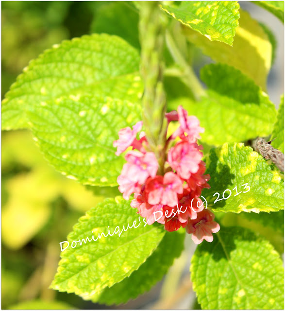 Mini red bloom