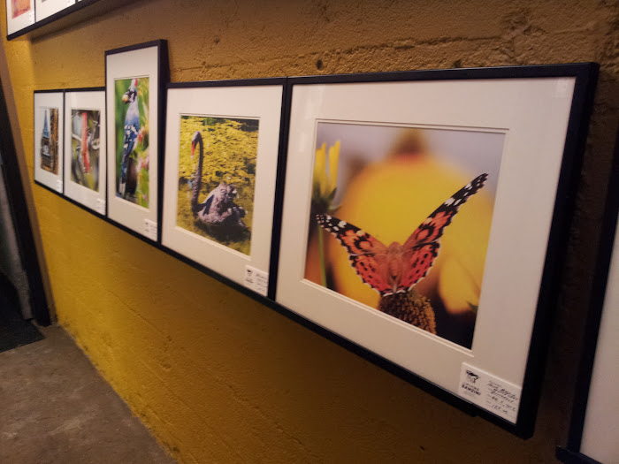 Images by Holly Massie displayed at The Flying Banzini, Ottawa