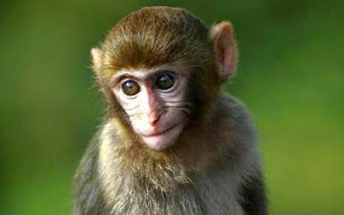 Where Did Rhesus Negative Blood Originate