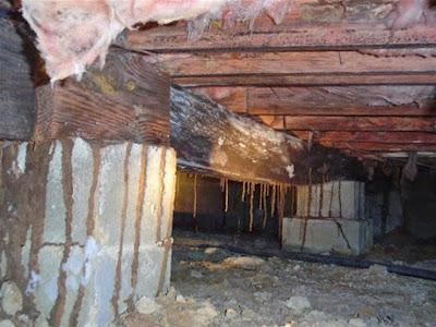 Một số hình ảnh nhà và công trình bị mối tấn công
