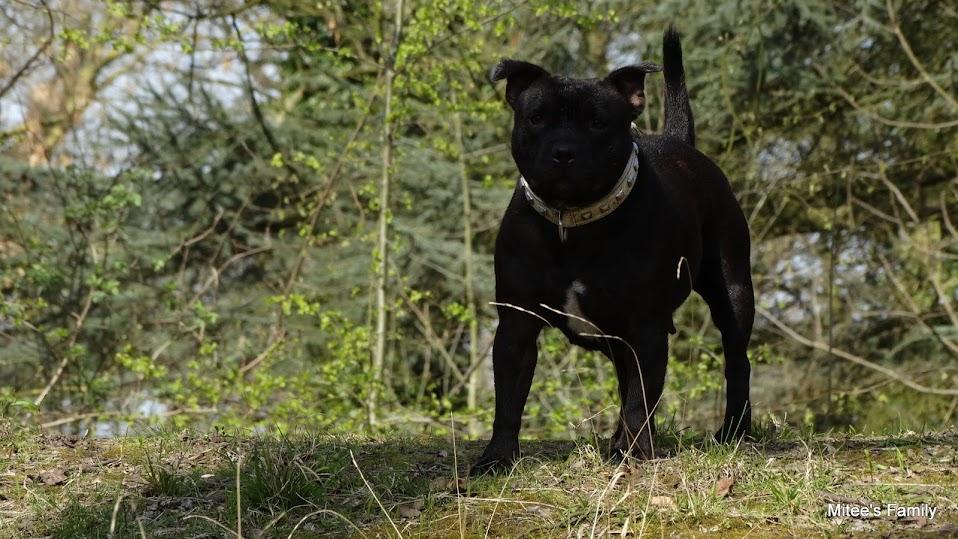 Balades canines en Nord (59)/Pas de Calais (62) - Boulogne-sur-Mer, Calais et Lille - Page 4 DSC01837
