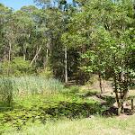 Lily Pond Picnic Area in Blackbutt Reserve (401158)