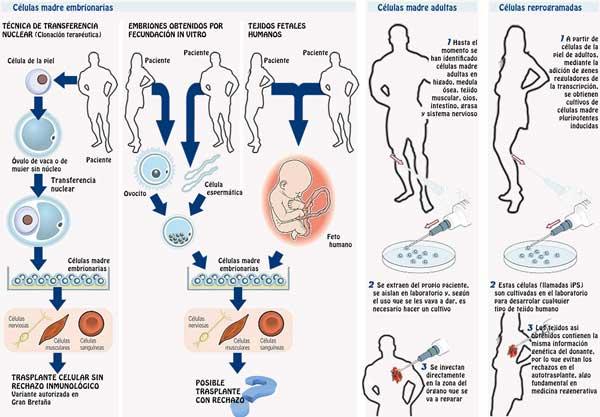 Resultado de imagen para Obtención de células madre
