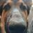 Marco Cruz avatar image