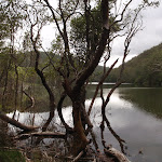 Middle Harbour Creek (123841)