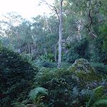 Beautiful scenery  along Finchs Line (163783)