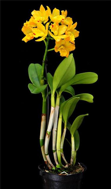 Растения из Тюмени. Краткий обзор - Страница 10 E2960628ee68