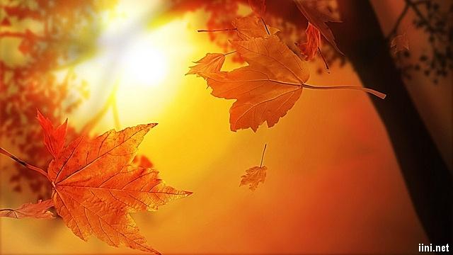 Chùm thơ Nắng Mùa Thu thật hay với sắc vàng quyến rũ, lãng mạn