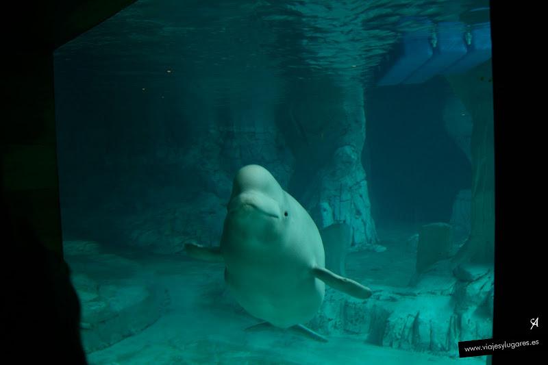 Foto del Oceanográfic