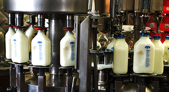 Hasil gambar untuk susu yang tidak dipasteurisasi