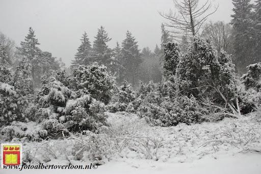 eerste sneeuwval in overloon 07-12-2012  (25).JPG