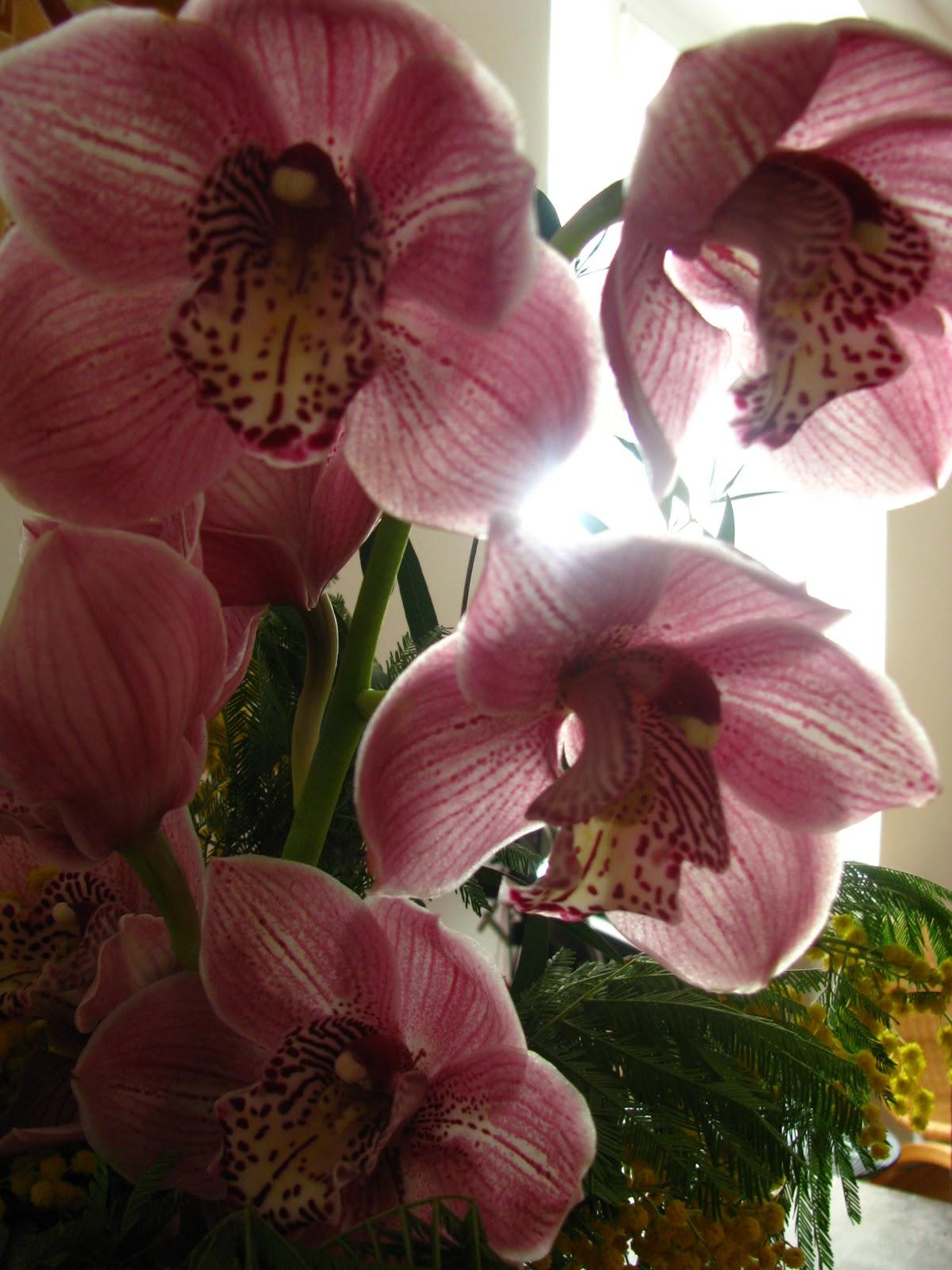 Tanti piccoli semi marzo 2011 for Semi orchidea