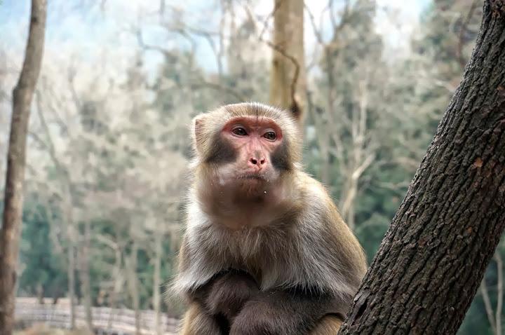 Mono en la entrada del parque forestal nacional