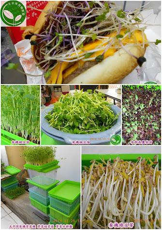 有機綠豆芽、有機豌豆苗、有機青花椰苗、有機紫高麗菜苗、全自動有機芽菜培育機、有機芽菜培育箱、有機芽菜水耕盤