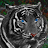 black tigress avatar image