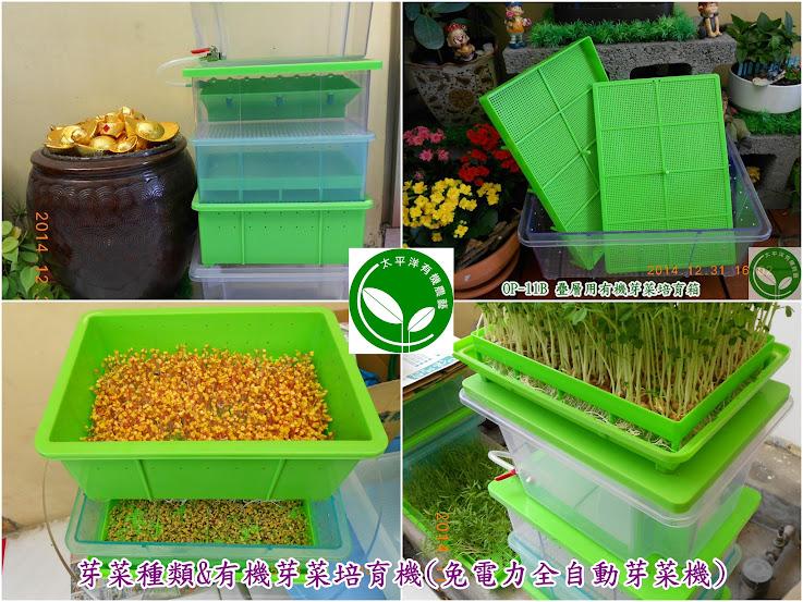 圖/芽菜苗的有機培育/太平洋有機OP-5N自動澆水芽菜機