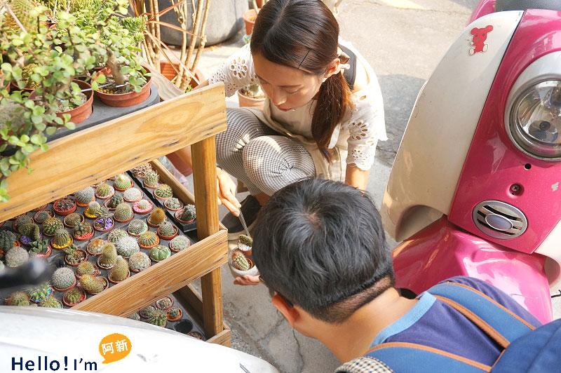 台南植栽,日光夏蘭-3