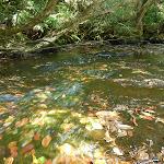 Mooney Mooney Creek at south of the dam (372913)