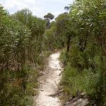 Lockleys Pylon Track (16111)