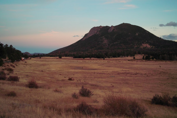 Elk field in RMNP