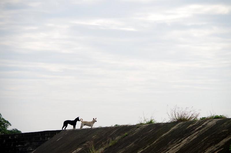 海岸線、車站、和貓