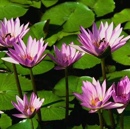 Huong Quach Photo 11