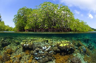 Keanekaragaman%252520Hayati Keanekaragaman hayati (biodiversitas)