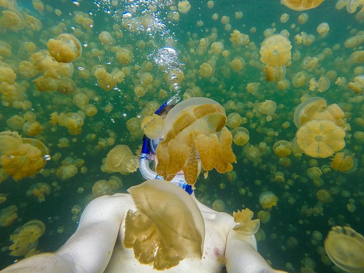 Palau Jellyfish Lake (Top Travel Destinations 2015).