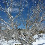 Enjoying the snow (301054)