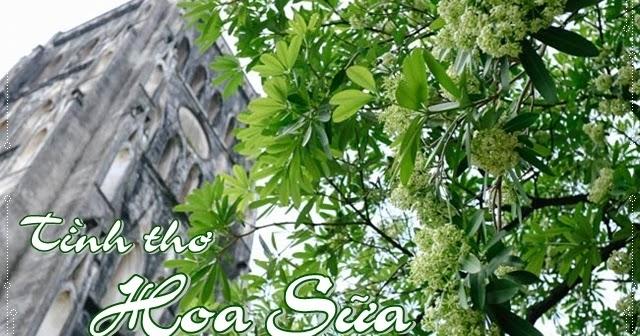 Chùm thơ tình Hoa Sữa hay, thơ viết về sắc hương hoa và Mùa Thu