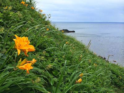 礼文島と利尻島の山歩き(速報)