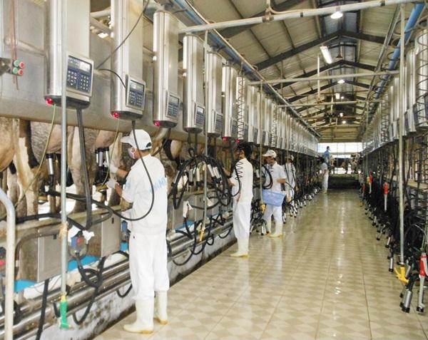 Đơn hàng chăn nuôi bò sữa cần 3 nam thực tập sinh làm việc tại Hokkaido Nhật Bản tháng 11/2016