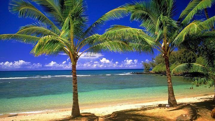 tropical coconut trees wallpaper