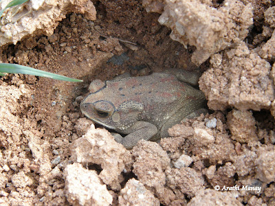 29-Oct-2010 Toad