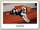 Habba