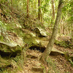 Rocky stepped track on the way to Gap Creek Falls in the Watagans (323735)