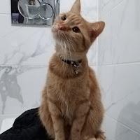 Naz Kara's avatar