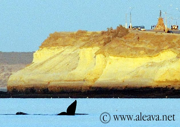 Avistaje de Ballena en Puerto Madryn desde la Playa
