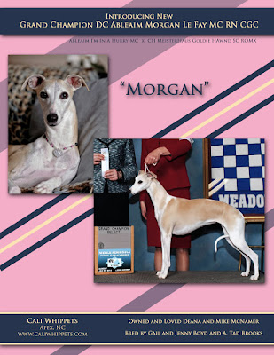 "New Grand Champion ""Morgan"" - 5/13/12"