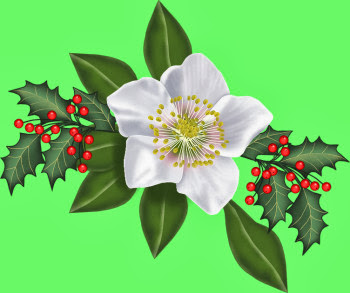 V~ChristmasRoseWithHolly.jpg