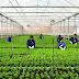 Đơn hàng nông nghiệp cần 18 nữ thực tập sinh làm việc tại Fukushima Nhật Bản tháng 04/2017