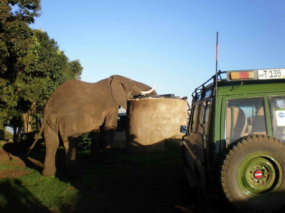 Ngorongoro campsite - Elephant drinking our water!