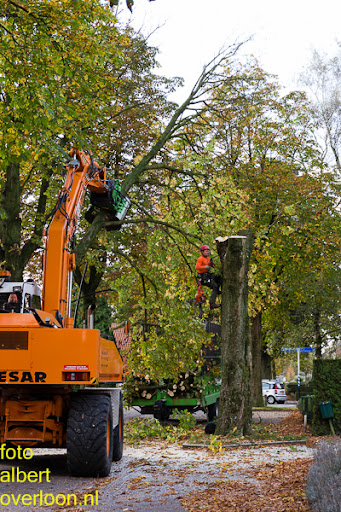 Bomen gekapt Museumlaan in overloon 20-10-2014 (22).jpg