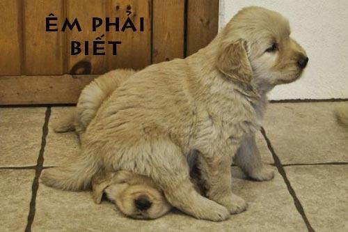 Ảnh chế chú cún dễ thương