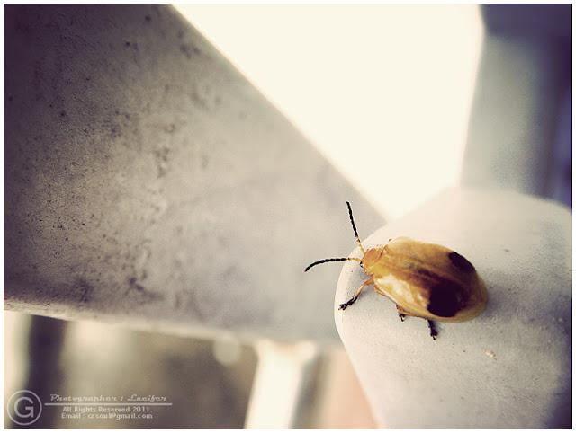 Photograph Fly Ladybug